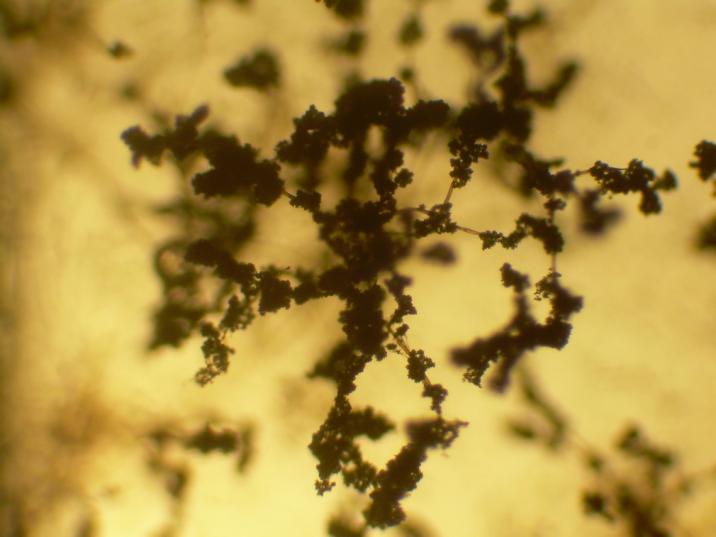 Trichoderma – naturalne metody uprawy roślin