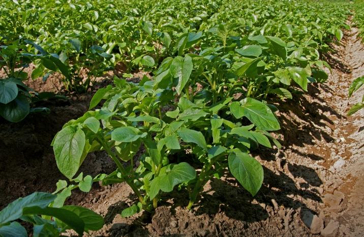 Biologiczna ochrona roślin – jak dbać o uprawy?